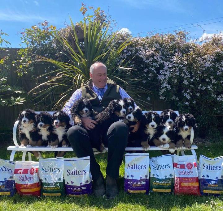 11 Bernese Puppies