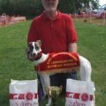 Artemis English Derby Cons Puppy winner 2014