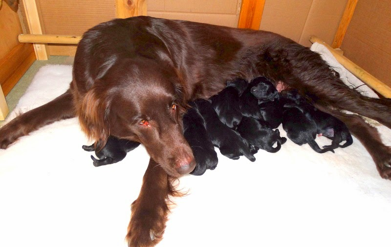 The day the puppies were born (Polly)
