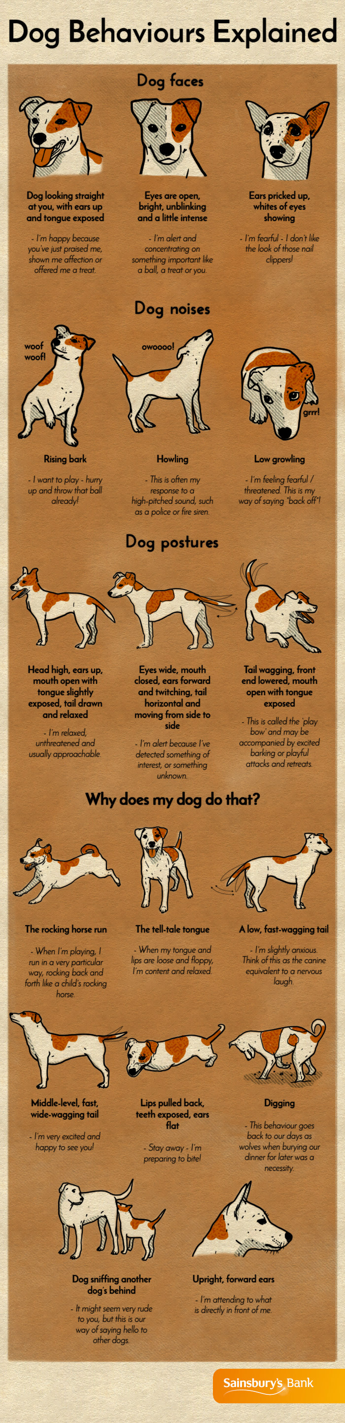 dog-behaviours
