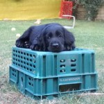 pup on crate