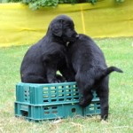 pups on crate 2